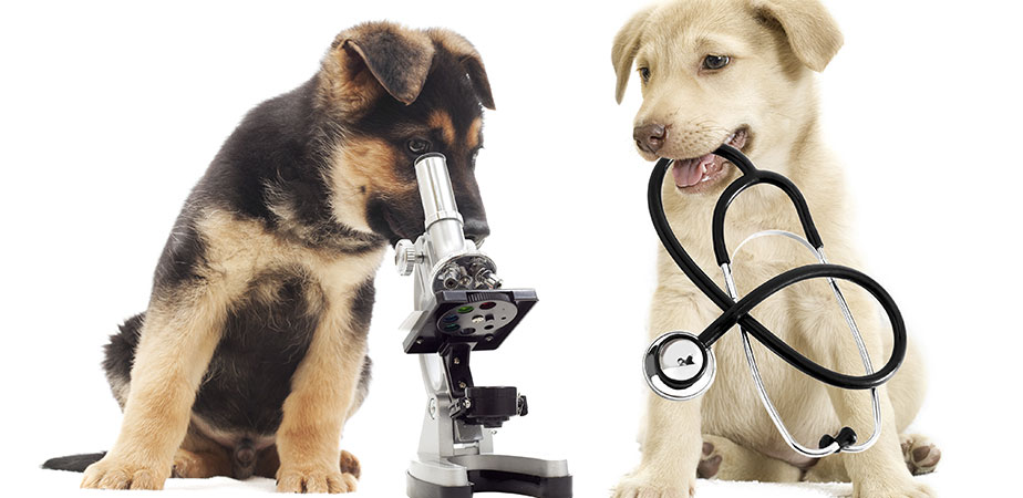 Diagnostic Veterinar de Laborator